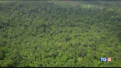 La foresta amazzonica patrimonio in pericolo