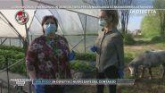 Coronavirus, emergenza in agricoltura