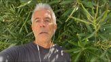 Cannabis, promotori referendum: basta proibizioni, libertà scelta
