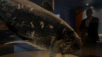 Pesce preistorico riemerge dagli abissi: la scoperta