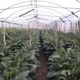 La Natura Frutta e Verdura azienda agricola