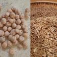 Agriturismo Le Giunchiglie - Azienda bioagrituristica Grano varietà Cappelli e Ceci biologici