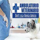 Ambulatorio veterinario Dott.ssa Ilenia Amico