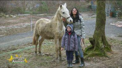 Shair, un bellissimo cavallo