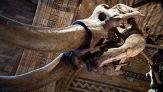 Quindici milioni di dollari per far rivivere il Mammut