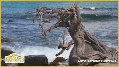Anticipazione Puntata 9 - ABC Islands