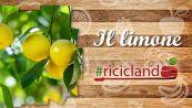 Come riutilizzare le bucce del limone?
