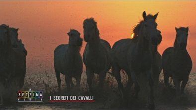 I segreti dei cavalli