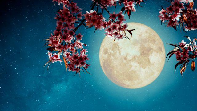 24 giugno, come ammirare la 'luna piena della fragola'