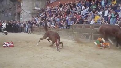 Palio di Siena, morto il cavallo Raol