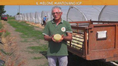 Il melone mantovano IGP