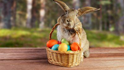 Perché il coniglio è il simbolo pasquale?