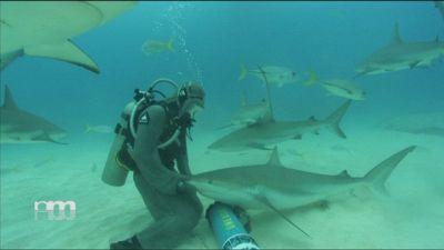 La donna che accarezza gli squali