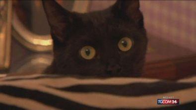E' la giornata del gatto nero