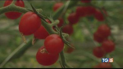 Agricoltura del futuro dall'Olanda all'Italia