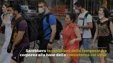 Perché i pipistrelli non si ammalano di Covid, lo studio italiano