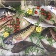 Kalos Ristorante Pizzeria pesce fresco