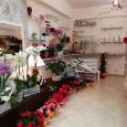 LA BOTTEGA DEI FIORI fiori e piante