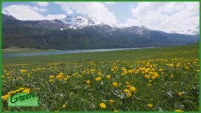 Alla scoperta della Svizzera tra fantasia e realtà.