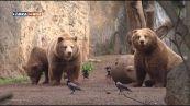 Gli orsi del Bioparco di Roma