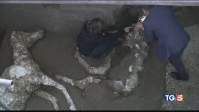 Straordinaria Pompei il cavallo del generale
