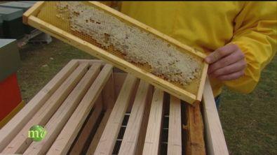 L'allevamento delle api