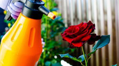 Afidi, 4 rimedi naturali per proteggere orti e giardini