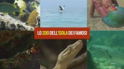 Lo zoo dell'Isola dei Famosi