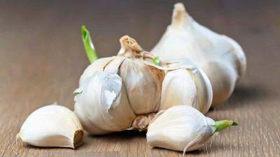 Perché non devi eliminare il germoglio dall'aglio