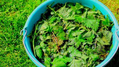 Macerato d'ortica, il fertilizzante naturale fai da te