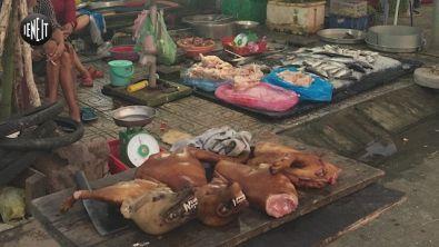 Carne di cane: anche il Vietnam ha il suo mercato