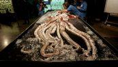 Il calamaro gigante esiste: tutti gli avvistamenti