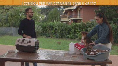 I consigli per far convivere cane e gatto