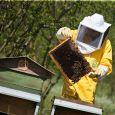 Apicoltura Brezzo apicoltori