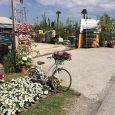 Vivai Borgo Verde fiori e piante