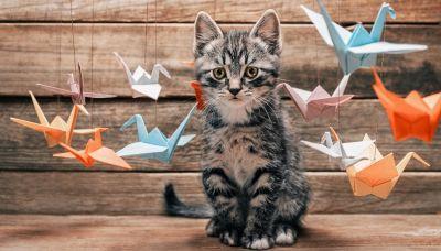 Il designer giapponese che crea cucce per gatti con gli origami