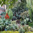 Progettazione giardini mediterranei