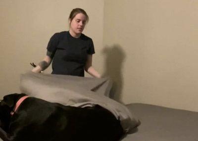 Vuole rifare il letto ma il cane è d'intralcio