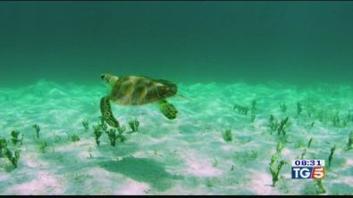 Un docufilm sulle tartarughe marine