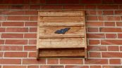 Bat Box stermina zanzare: come installarle e perché