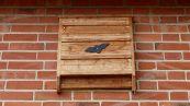 Bat Box stermina zanzare: come installarle e perché