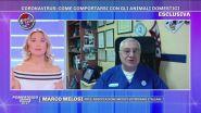 Coronavirus: come comportarsi con gli animali domestici