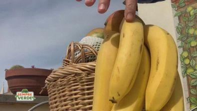 Banane e bucce