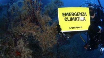 Greenpeace: mare sempre più caldo e perdita di biodiversità
