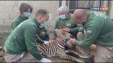 Un lieto evento allo Zoo di Napoli