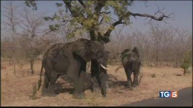 Botswana, torna la strage degli elefanti