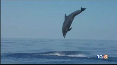 Giù le mani dai delfini