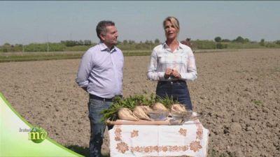 La coltivazione delle barbabietole da zucchero in Italia