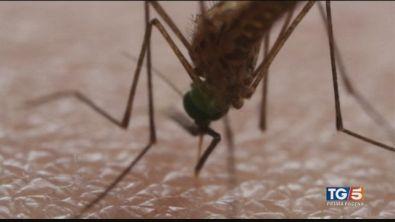 Nuova vittima della febbre del Nilo
