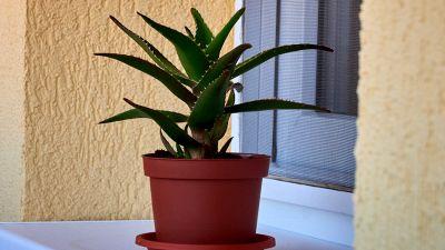 6 piante perfette per chi non ha il pollice verde
